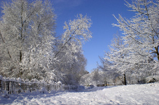 Winter. Berry Orchard