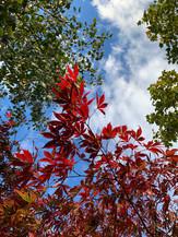 Autumn - Deborah Sarjant 4