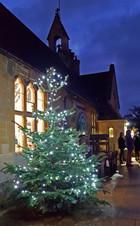 Winter. Shop Xmas Tree