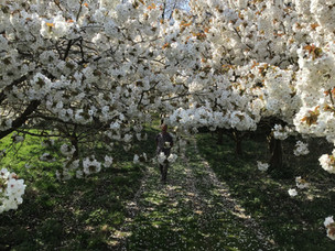 The Cherry Orchard Compton Scorpion 1