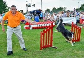 Dog agility 2