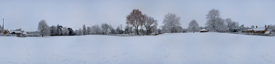 Berry orchard in the snow