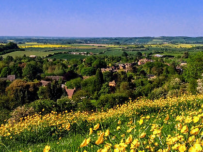 View of Ilmington with buttercups