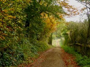 Pig Lane in October