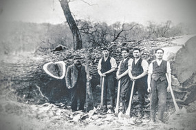 Mayo's timber felling. 3rd from left - Sam Handy