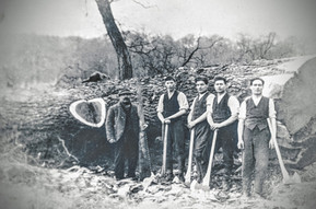 Mayo's timber felling. 3rd from left Sam Handy