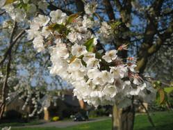 spring 6.JPG