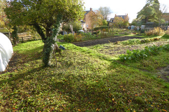 Allotments at the Crowyard, Front St. in autumn - B
