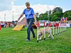 Dog agility 1