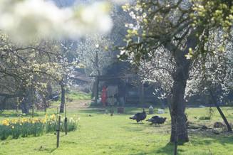 Spring turkeys