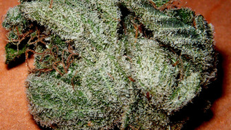White Russian is a refined bud.
