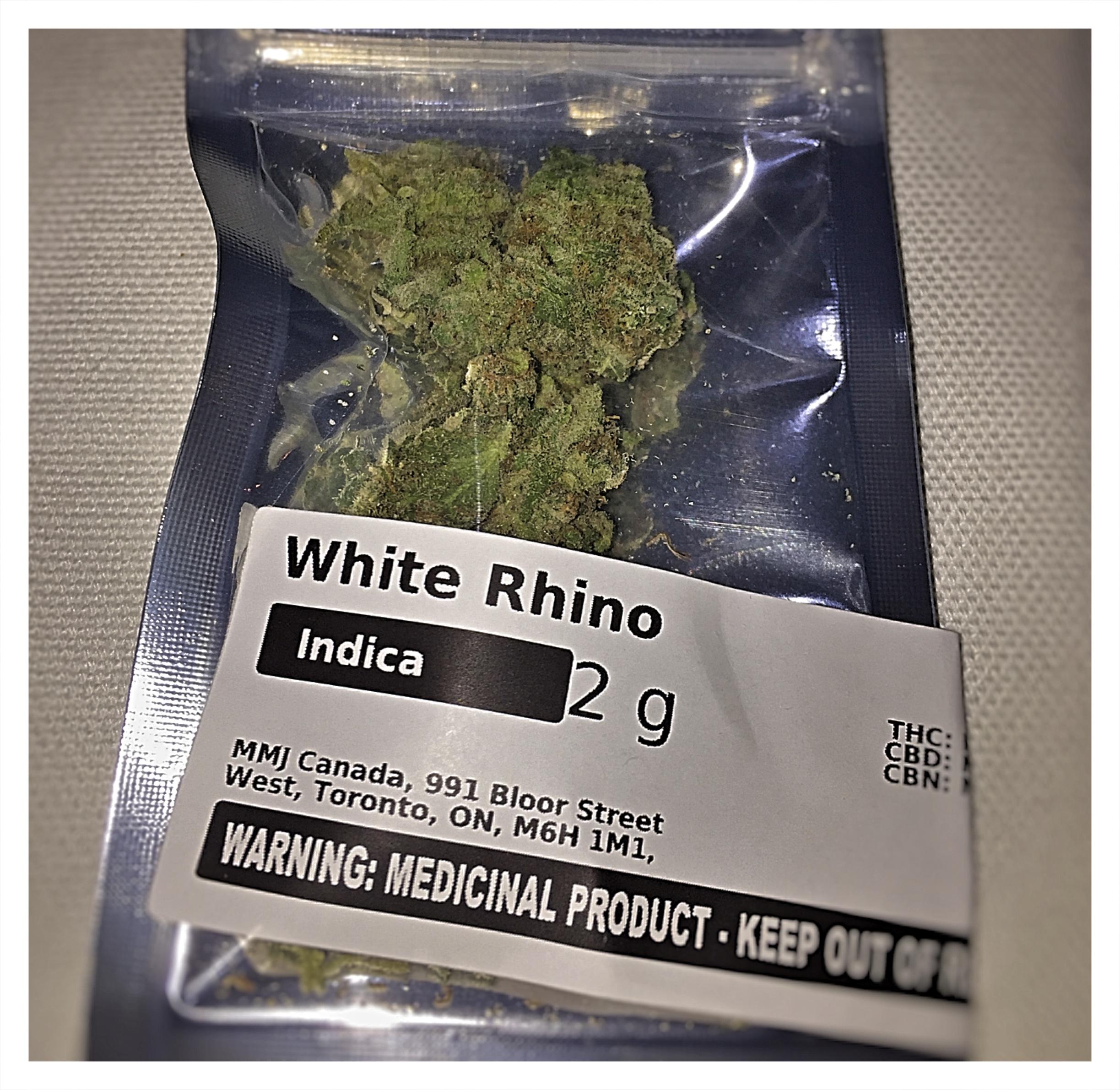 WhiteRhinoPost1