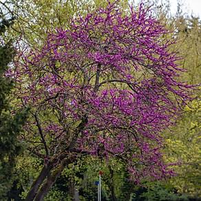 Botanischer Garten Hohenheim