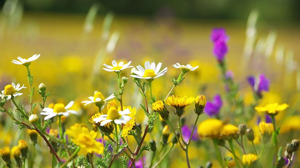 Veeva Aromatherapy