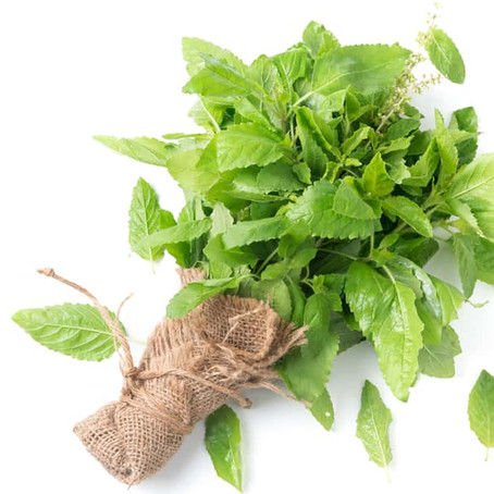 Holy Basil: The 'Sacred Herb' Used for Centuries To Relieve Stress and Anxiety