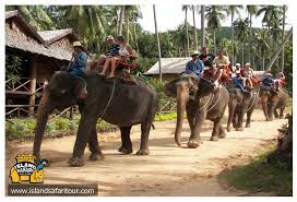 Namuang Safari Elephant