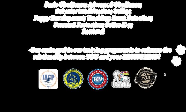203K9 TRAINING SERVICE, LLC. STAMFORD, CT 06902