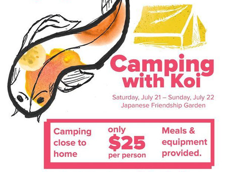 Camping with Koi at Japanese Friendship Garden