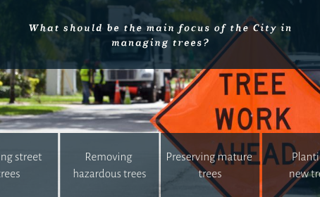 What Should Be The Main Focus Of The City In Managing Trees?