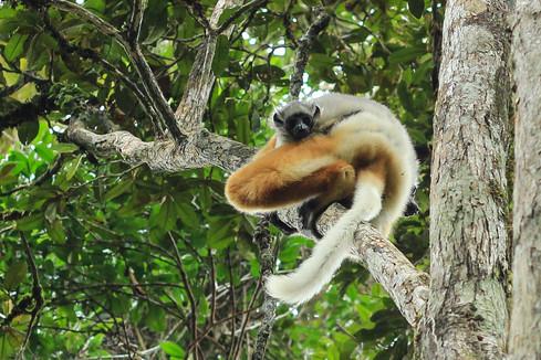 Lemurs | Madagascar