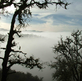 Ridge Fog