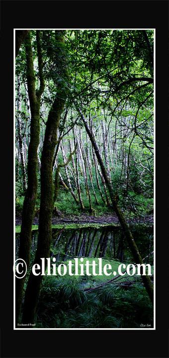 Scroll Enchanted Pond