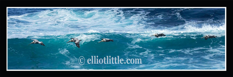 Pelicans in Waves