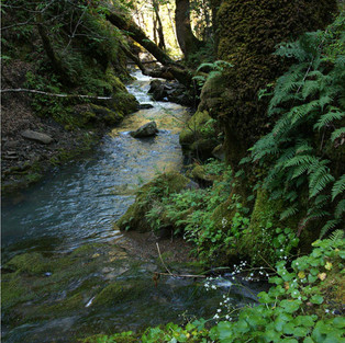 Spring Creek and Ferns