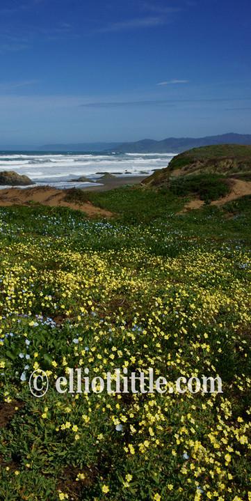 Scroll coastal flowers 5 yellow blue