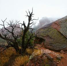 tree rock fog