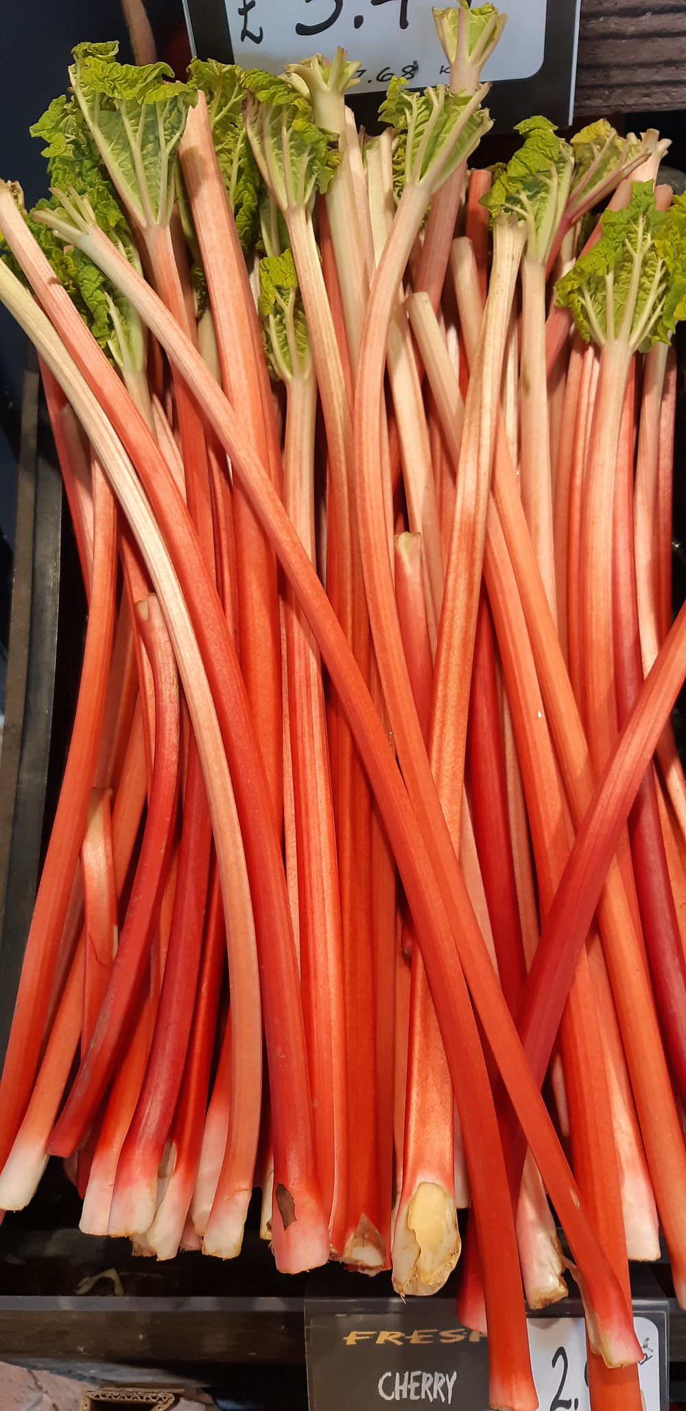 Forced Rhubarb Stems in box