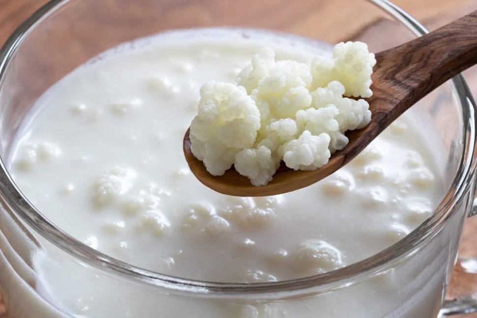 Spoon holding milk kefir grains