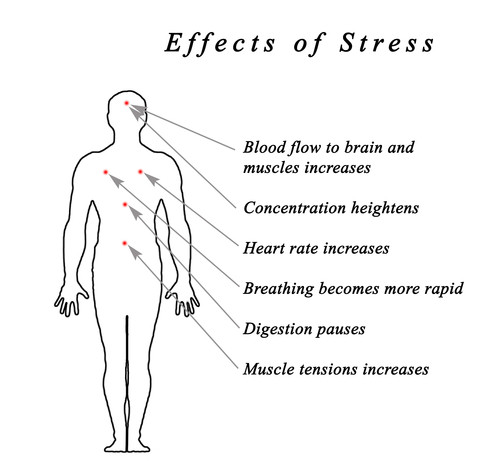 Stress effects many functions and wellbeing!