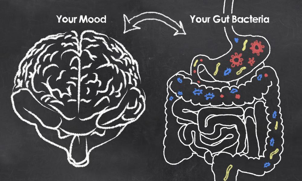 Gut brain link