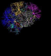 cranium-3244118_1280_edited.png