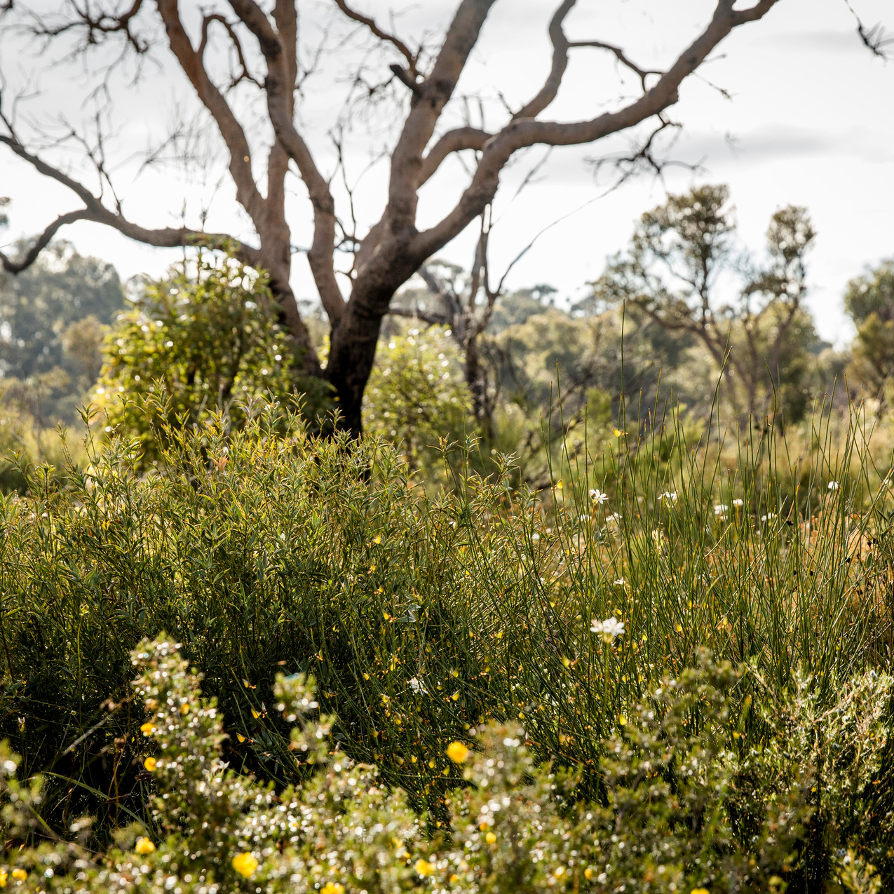 Kensington Bushland by Red Eclectic