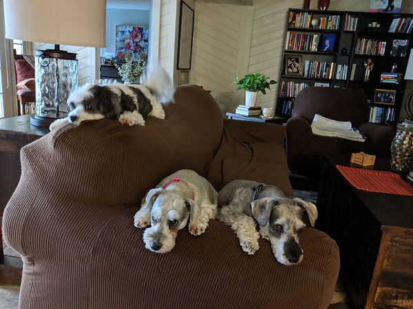 Puppies 8-31-19.jpg