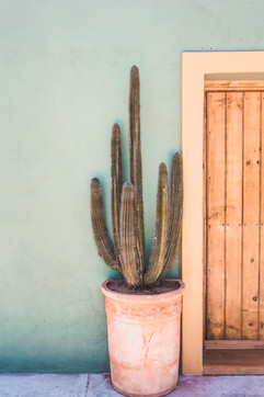 tall-cactus-in-a-pot-on-a-terrace-E8GZH9