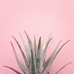 plants-on-pink-fashion-idea-aloe-on-pink