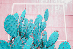 turquoise-cactus-on-pink-background-tren