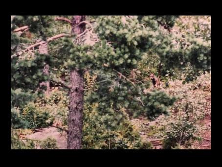 Introducing… Cederfeldt 🇸🇪 - 'Bats and Ivy' (single)