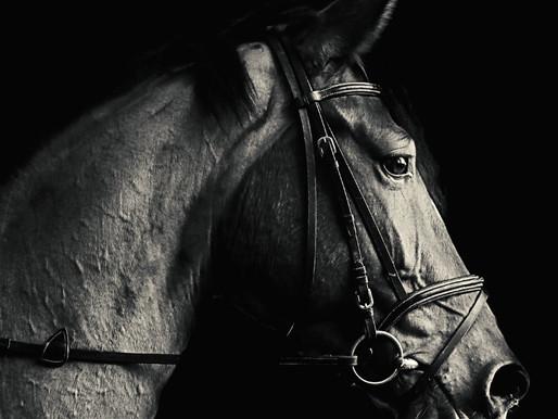 'Haggren Gravlund' - 'Horseman Pass By' (album)