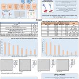 יצירת מודלים לתאיים ALS _שקד לוינר.PNG