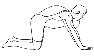 Exercises For Core Stability