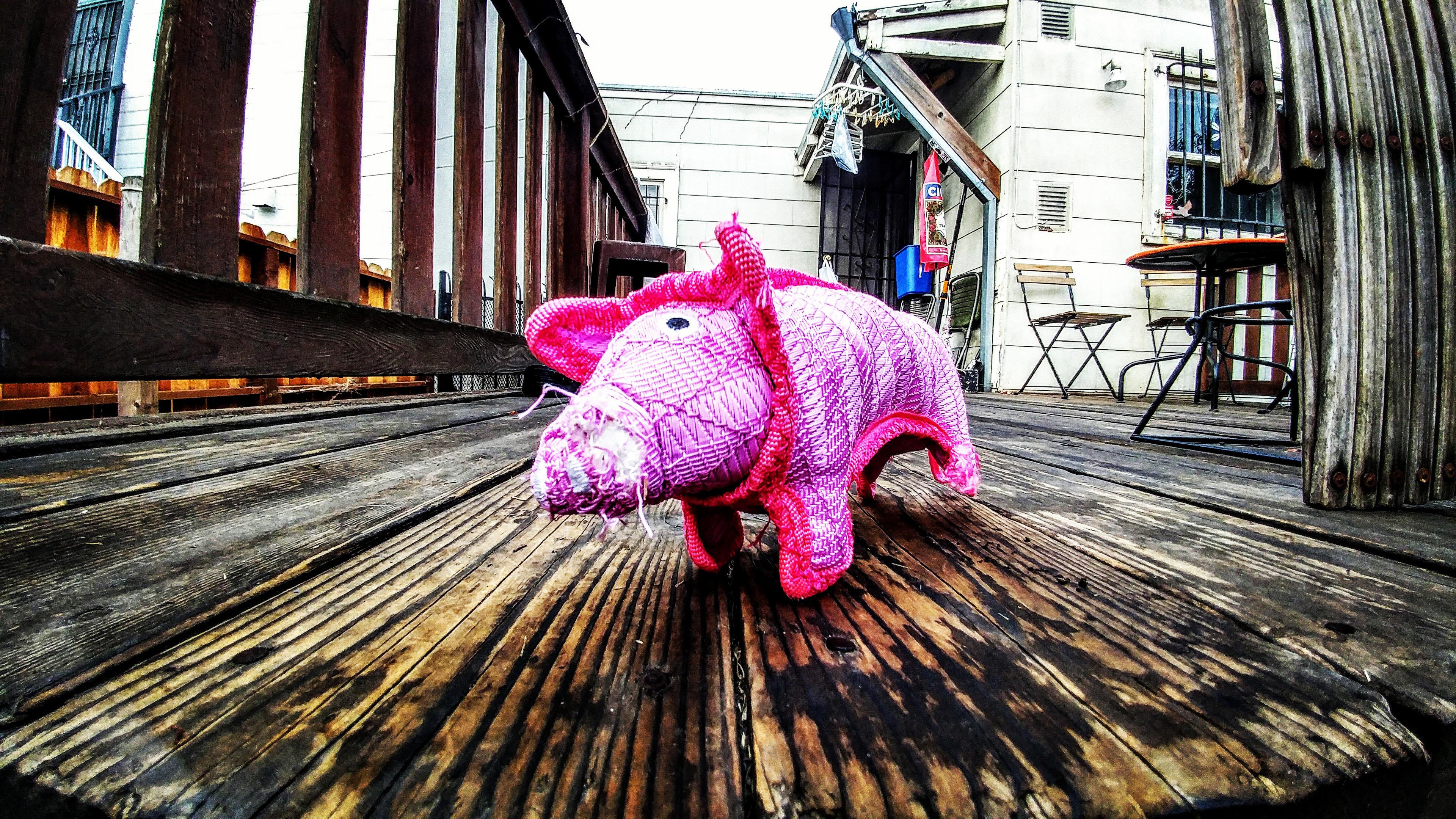 pig on deck (2019)