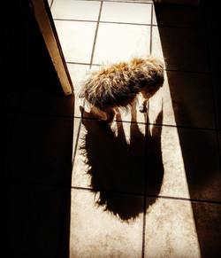 Ollie and his shadow (2019)