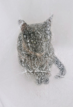 cat and shower curtain (2020)