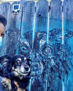Sammy on the fence (2020)