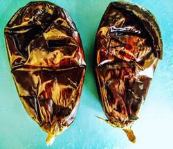 eggplant (2019)
