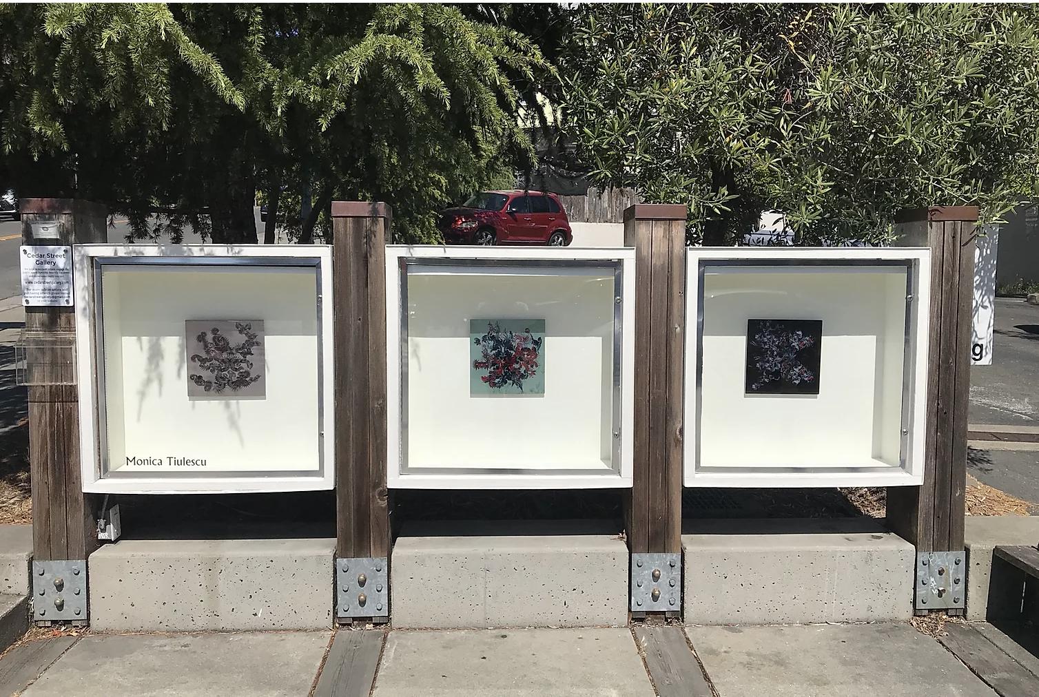 Species at Cedar street (2020)